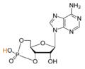 Cyclic-adenosine-monophosphate-2D-skeletal4.png