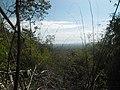Džungla.jpg