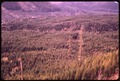 DOUGLAS FIR TREES IN OLYMPIC NATIONAL TIMBERLAND WASHINGTON. NEAR OLYMPIC NATIONAL PARK - NARA - 555111.tif