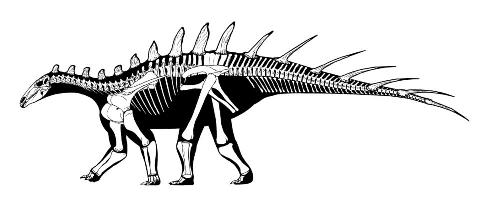 Dacentrurus armatus skeleton