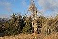 Dana Nature - panoramio.jpg