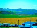 Dane County Farmland - panoramio (1).jpg