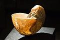 Decorative Nautilus shell (25163328708).jpg