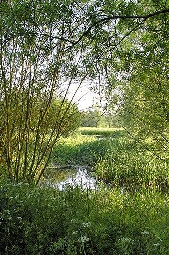 River Dove, Suffolk - The River Dove, near to Thornham Magna