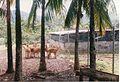 Deers in the Vale (3047320049).jpg