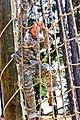 Defense.gov photo essay 120801-A-XXXXX-019.jpg