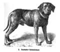 Deutscher Bullenbeisser 1889 Friedrich.png