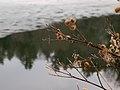 Dewey Pond (4458904828).jpg