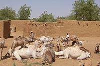 Diffa region resting camels mules road 2006.jpg