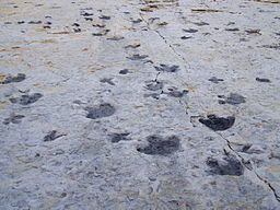 Dinosaur Ridge tracks.JPG