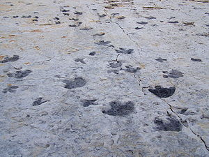 Tracks in rock at Dinosaur Ridge, Morrison Fos...