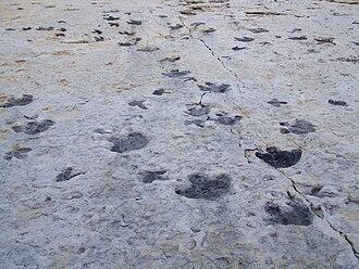 Dinosaur Ridge - Image: Dinosaur Ridge tracks