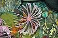 Diorama of a Devonian seafloor - crinoids, blastoid, corals (44933264494).jpg