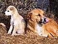 Dogs habitat.jpg