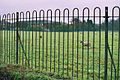 Don't fence me in. - geograph.org.uk - 97841.jpg