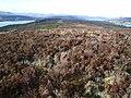 Dornoch Firth and Loch Migdale - geograph.org.uk - 126846.jpg