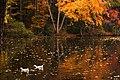 Ducks in Fall.jpg