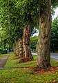 Dunswell Rd, Cottingham IMG 4972 - panoramio.jpg