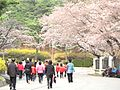 Duryu Park Cherry Blossoms.jpg