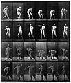 "E. Muybridge ""Animal locomotion"", plate Wellcome L0018590.jpg"