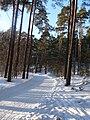 EU-EE-Tallinn-Pirita-Kloostrimetsa 012.JPG