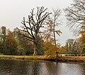 Een in slechte conditie verkerende eik (Quercus) met daarnaast een jonge beuk (Fagus sylvatica). Locatie, Historisch Park Heremastate 03.jpg
