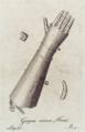 Eiserne Hand Carl Lang.png