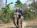 Elephant ride at Jaldapara forest.jpg