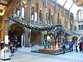Entrance Hall of the Natural History Museum.jpg