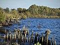 Ewiges Meer in Niedersachsen - Ostfriesland - größter Hochmoorsee Deutschlands Nr 1.jpg