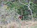 Expedição Serra dos Alves - Agosto 2013 - panoramio (2).jpg