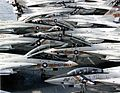 F-14As of VF-1 and VF-2 on USS Enterprise (CVN-65) c1976.jpg