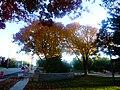 Fall in Maple Bluff - panoramio (1).jpg