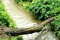 Fallen tree, Crawfordsburn Glen (2) - geograph.org.uk - 913150.jpg