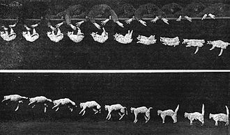 Cat behavior - Chronophotography of a falling cat by Étienne-Jules Marey, 1894