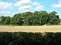Farmland near Watton - geograph.org.uk - 1454124.jpg