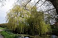 Feering Essex - Skye Green hamlet pond with willow.jpg