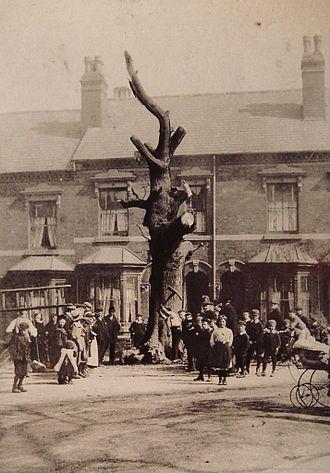 Selly Oak - Felling the Selly Oak, 1909