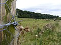 Fence Post - panoramio.jpg