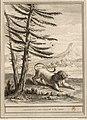 Fessard-Oudry-La Fontaine-Le lion et le moucheron.jpg