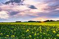 Fields of Fife (9042249947).jpg