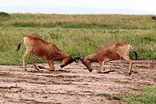 intraspecific relationship definition wikipedia