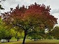 Finsbury Park 20171002 152646 (49370321567).jpg