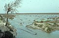 Fish traps set at junction of 2 lagoons, Camargue (26539082809).jpg