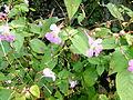 Fleurs au jardin agronomique tropical.JPG