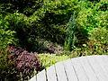 Flickr - brewbooks - Heathers - John M's Garden.jpg