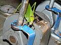 Flickr - megavas - insecto hoja (creo) 4.jpg