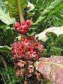 Flora Parque Nacional Manu 16.jpg