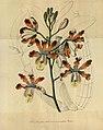 Flore des serres et des jardins de l'Europe - vol. 01 - page 271.jpg
