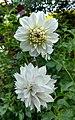 Flores de Guaramiranga CE - White 3.jpg